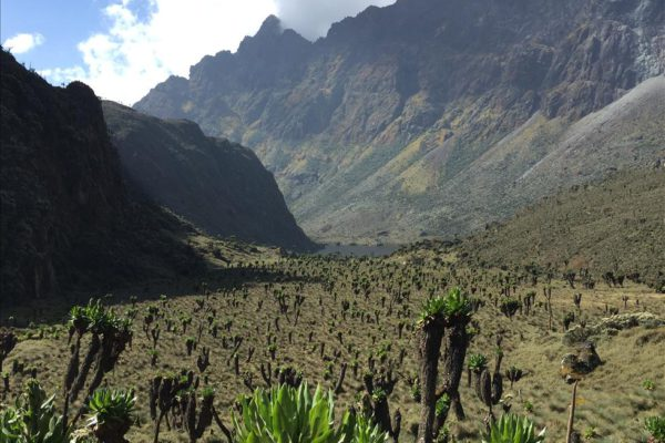 Amazing vegetation in Ruwenzori Mountains